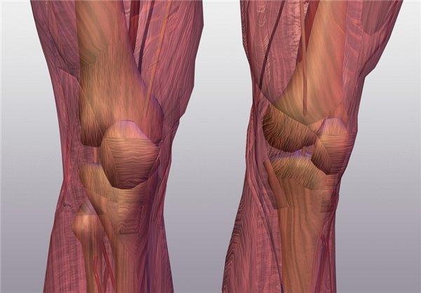 خستگی عضلانی از مهم ترین عوامل اختلال و کاهش عملکرد ورزشی