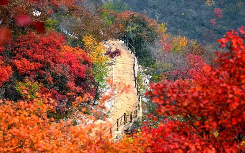 با سفر به چین در ماه نوامبر، در جشنواره چونگ یونگ چین شرکت کنید!