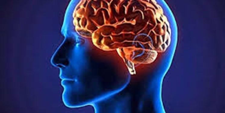 جوانسازی سیستم ایمنی قدم اصلی در ترمیم مغز