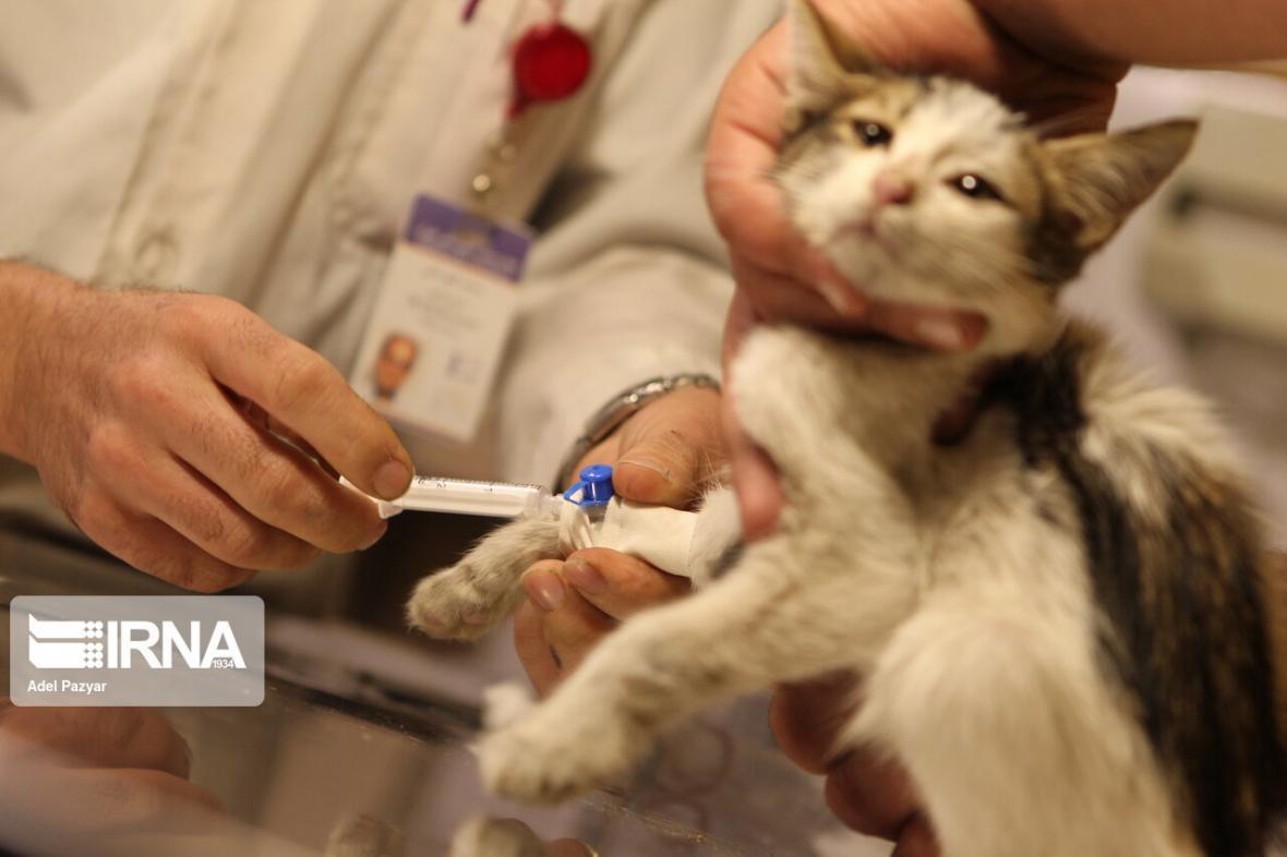 خبرنگاران مجلس به سازمان دامپزشکی برای جلوگیری از پملب مراکز درمانی نامه زد
