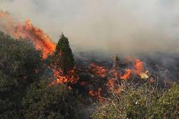 آتش دوباره به جان جنگل های بلوط بلند چهارمحال و بختیاری افتاد