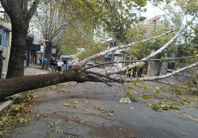 هواشناسی، رگبار باران و احتمال تگرگ از شنبه ، خطر وزش باد شدید و شکستن درختان؛ خبرنگاران