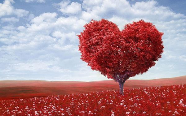 مجموعه ای زیبا و جدید از عکس گل عشق