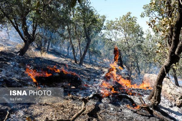فقر اجتماعی و معیشتی موثر در آتش سوزی جنگل ها